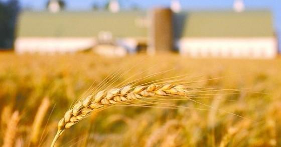 """农产品电商:远非""""看上去很美""""那么简单"""