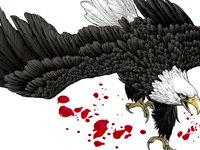 互联网盒子,折翼的老鹰