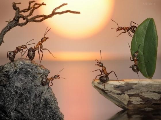 被阿里巴巴深刻改变的蚂蚁中国-钛媒体官方网站