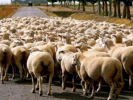 羊群效应 ─ 他人的赞会让我们更想按赞