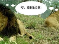 豌豆荚报复性封锁百度应用,搜百度糯米被推荐美团|10月10日坏消息榜