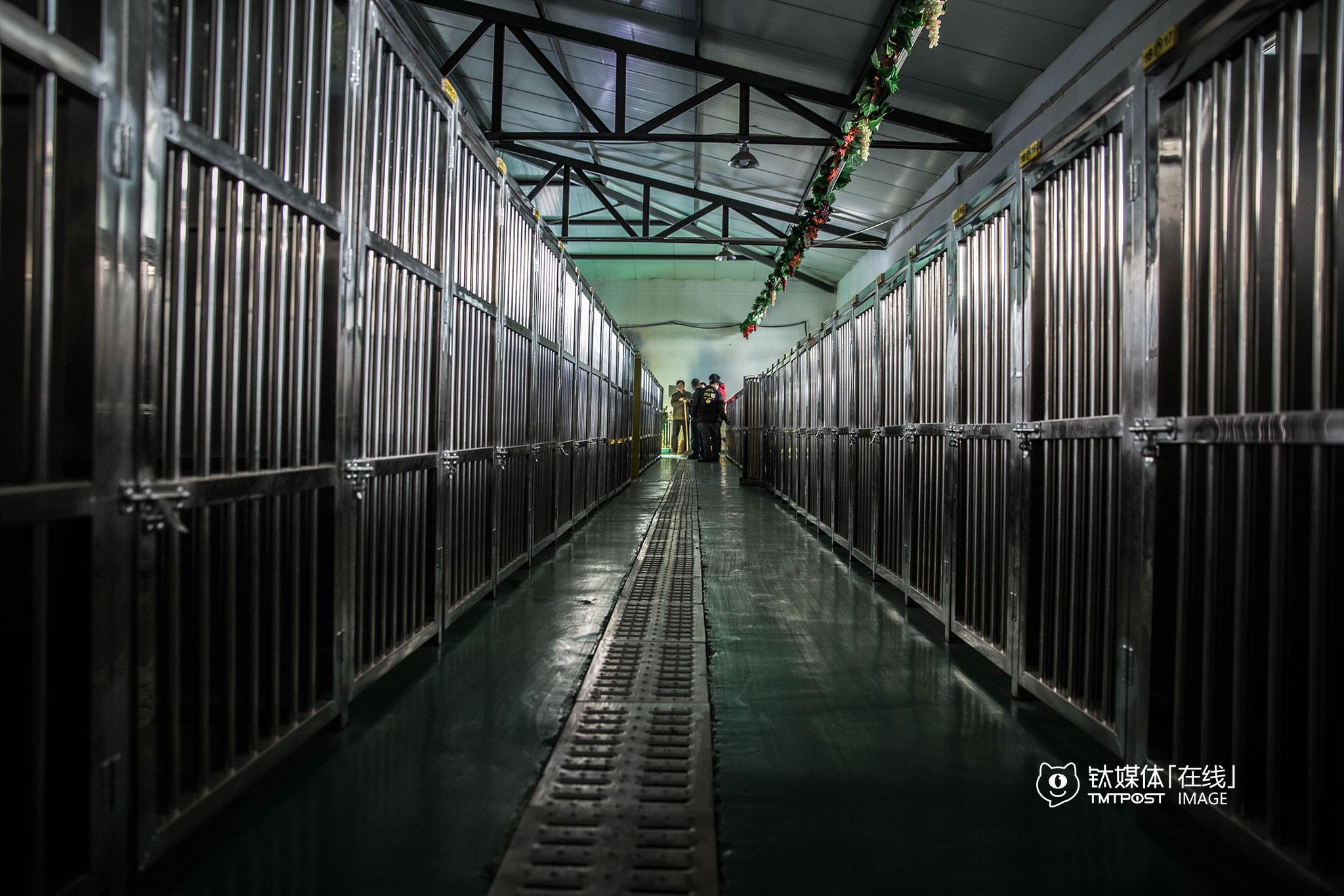 """""""狗狗学校""""的""""学生宿舍""""有122个位置,春节前一周就收到了90个预订,""""由于这里承载量有限,我们到90就没再接受预约了。""""要敬文介绍,""""狗狗专车""""计划在北京4个区域开办4个狗狗学校,""""通州这个这只是开始""""。"""
