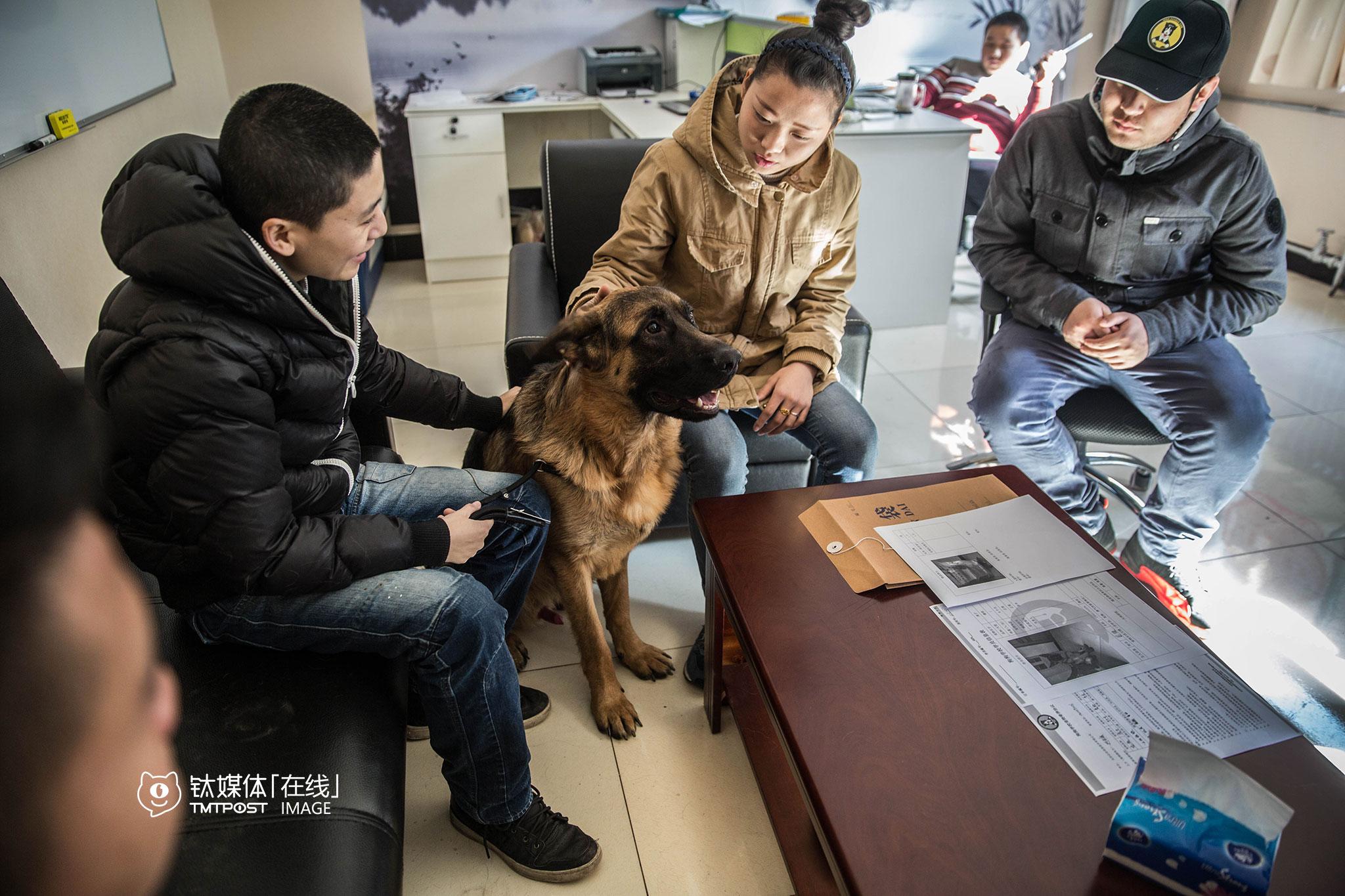"""2月19日,家住北京丰台的用户接走了春节期间寄养在这个狗狗学校的德牧。目前,这所学校按照犬型大小,每只狗每天收费60到100元不等,同时还可以为用户提供""""狗狗专车""""上门接送服务,对寄养狗狗的运送费也有相应折扣。"""