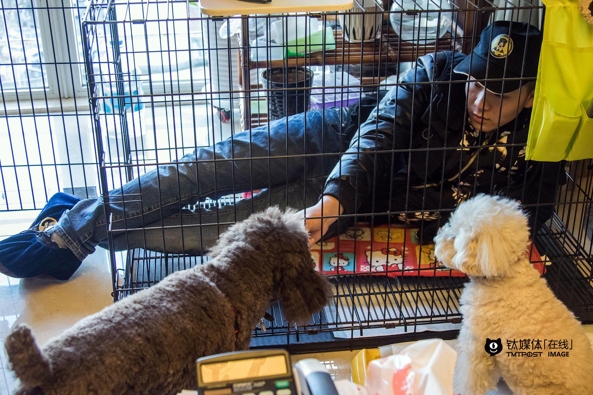 """2月18日,训犬师海哲上门对用户的泰迪进行不良行为矫正,他从业8年,现在是""""狗狗家教""""的全职训犬师。用户是一对年轻夫妇,他们准备带着狗狗移民海外,但其中一只出现了咬人、乱叫等不良行为,而当地对宠物饲养的规则比较严格,他们想通过训犬师的帮助来解决狗狗的问题。"""