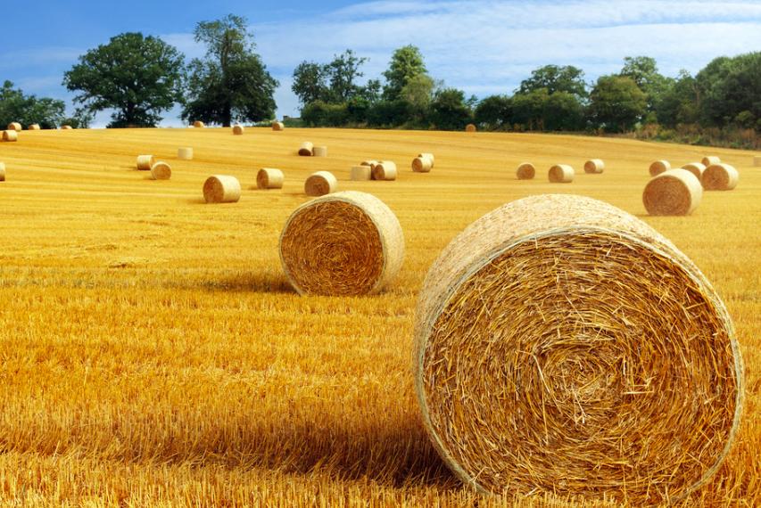 两会题案转向农村,互联网+农村还能怎么玩?-钛媒体官方网站