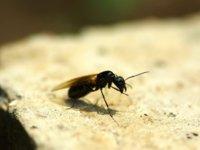 """""""以毒攻毒"""",用转基因蚊子来抑制病毒蔓延的办法行得通吗?"""