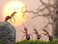 我是作者东方亦落,写作路上不断积累、前行的小蚂蚁