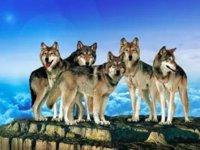 """在华为,""""要么成为狼,要么滚""""和那些""""挺尸""""的鸡血岁月"""