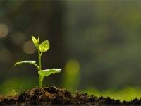 【征稿】做生态是企业做大的唯一选择吗?