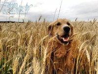 《一条狗的使命》6天过2亿,票房破纪录之外还有阿里影业的野心