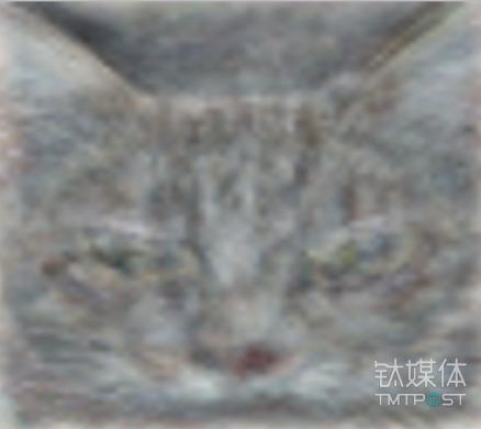 """谷歌看了1千万个视频才会辨认""""猫""""。图片来源/medium.com"""