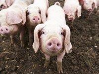 """当互联网理财遇上""""猪"""",这是机遇还是陷阱?"""
