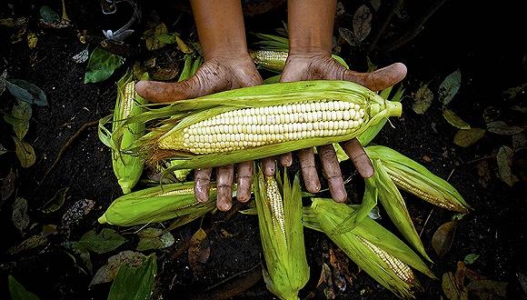 种地也要输给人工智能,浅谈AI在农业领域的应用-钛媒体官方网站