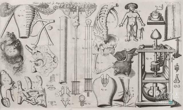 图丨17世纪的人体器官草图