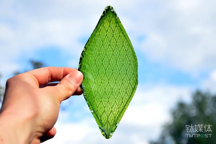人工树叶。图片来源/funbugi.com
