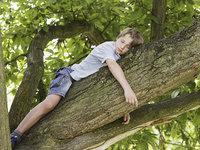 在床头种上这棵树,给你的梦境来点音乐 | 生活方式