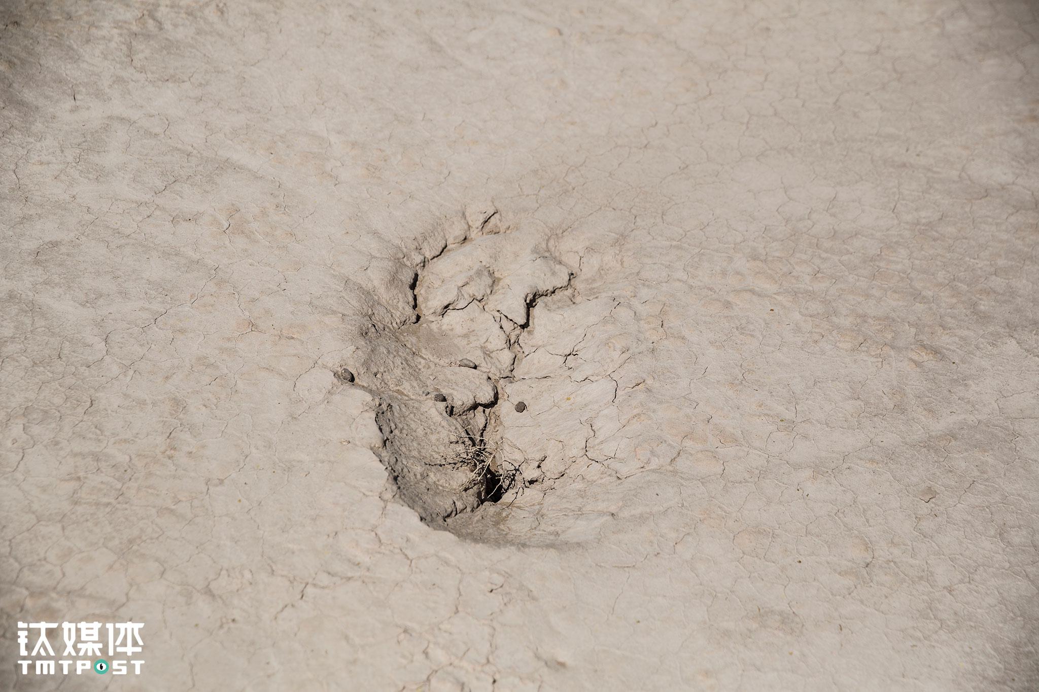 """为了保证农作物用水,村民们在村里集资钻了井用于灌溉。在这个人们一个月也洗不了一个澡的干旱村庄,水资源异常珍贵,首要用途也在庄稼,而村外跟沙漠一路之隔的植树带,很多政府拨款人工种植的防沙植物却因缺水而成片枯死。对村民来说,地下水十分有限,庄稼、牲口、人的用水都顾不过来,没有人会挑着自己花水资源费买来的水去灌其他""""不相关""""植物。"""