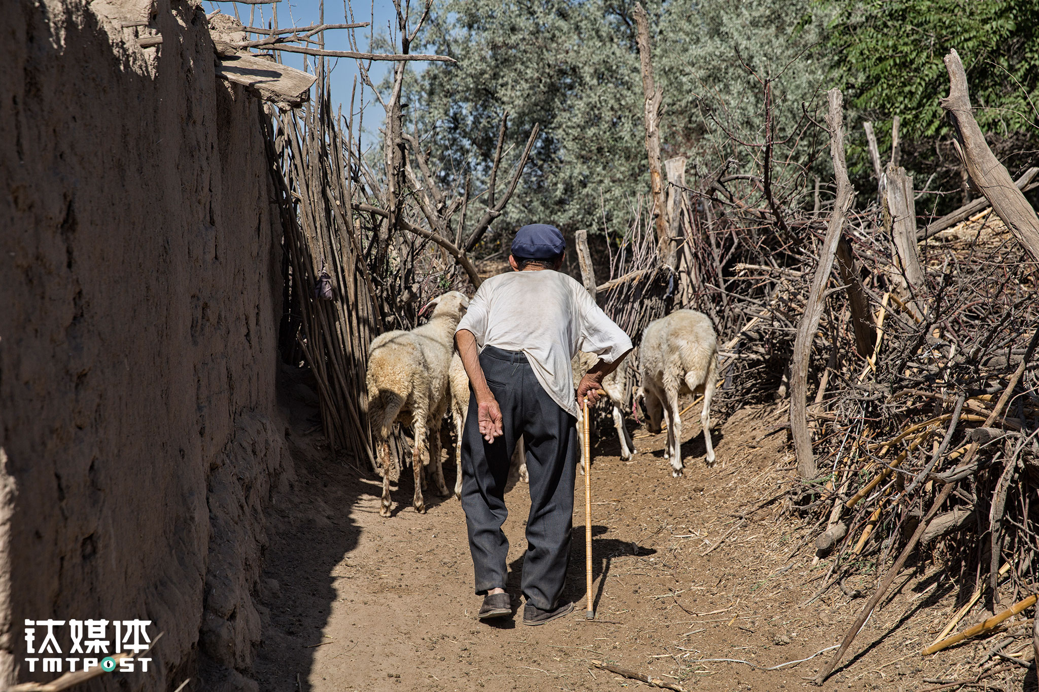 礼智村,一位老人在往自家羊圈赶羊。像很多不发达地区的农村一样,这里也面临着年轻劳动力外流的情况。种庄稼的辛苦和低收益,使得年轻人选择了外出打工,留下的老年人,像李生父亲67岁年纪还下地的已经几乎没有了。