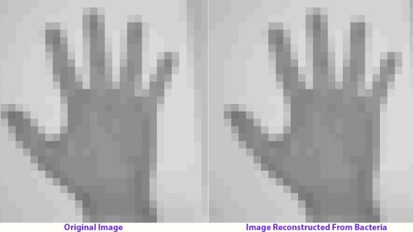 左为原始图像,右为从基因中提取的图像。图片来源/wired.com