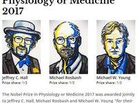 2017年诺贝尔生理学或医学奖揭晓,2万字长文带你解读生物钟机制