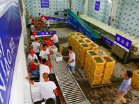 Alibaba-Backed Cainiao Logistics Network Aims to Enable 24-Hour Domestic Deliveries and 72-Hour Global Deliveries Within Five Years