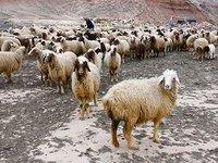 进击的羊毛党:近亿僵尸手机杀向海外,东南亚欺诈流量占三成