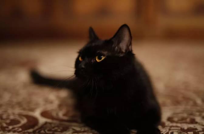 豪送1亿电影票,全球发行的《妖猫传》如何回收成本?