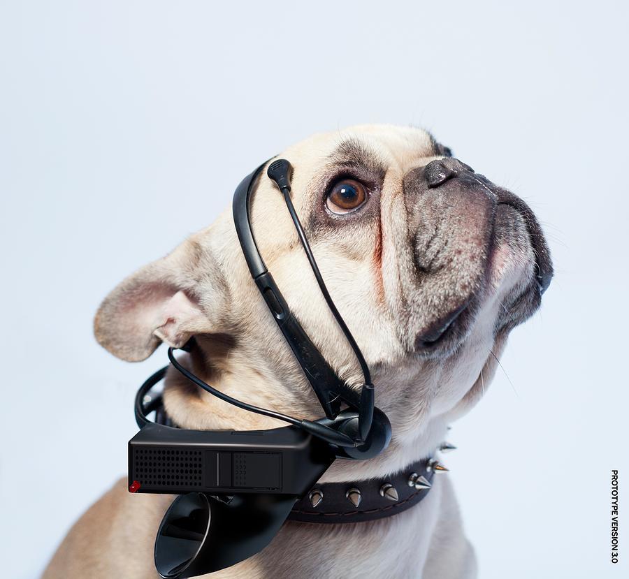 要让人类听懂动物的语言,AI还需克服哪些难题?