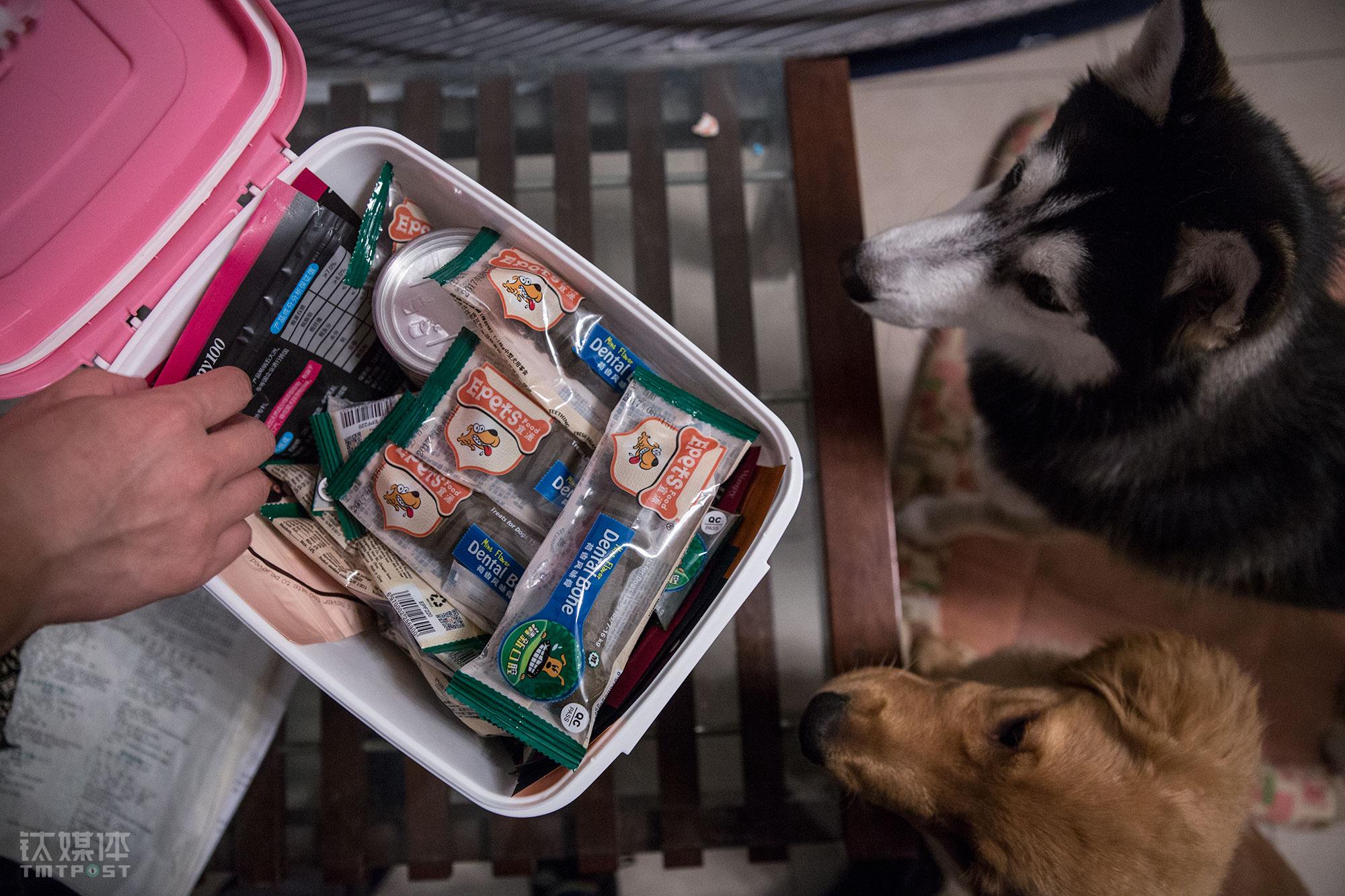 Summer和多宝在等待老徐给他们发零食。老徐家每个月花在这两只狗身上的日常开销大约2000元。