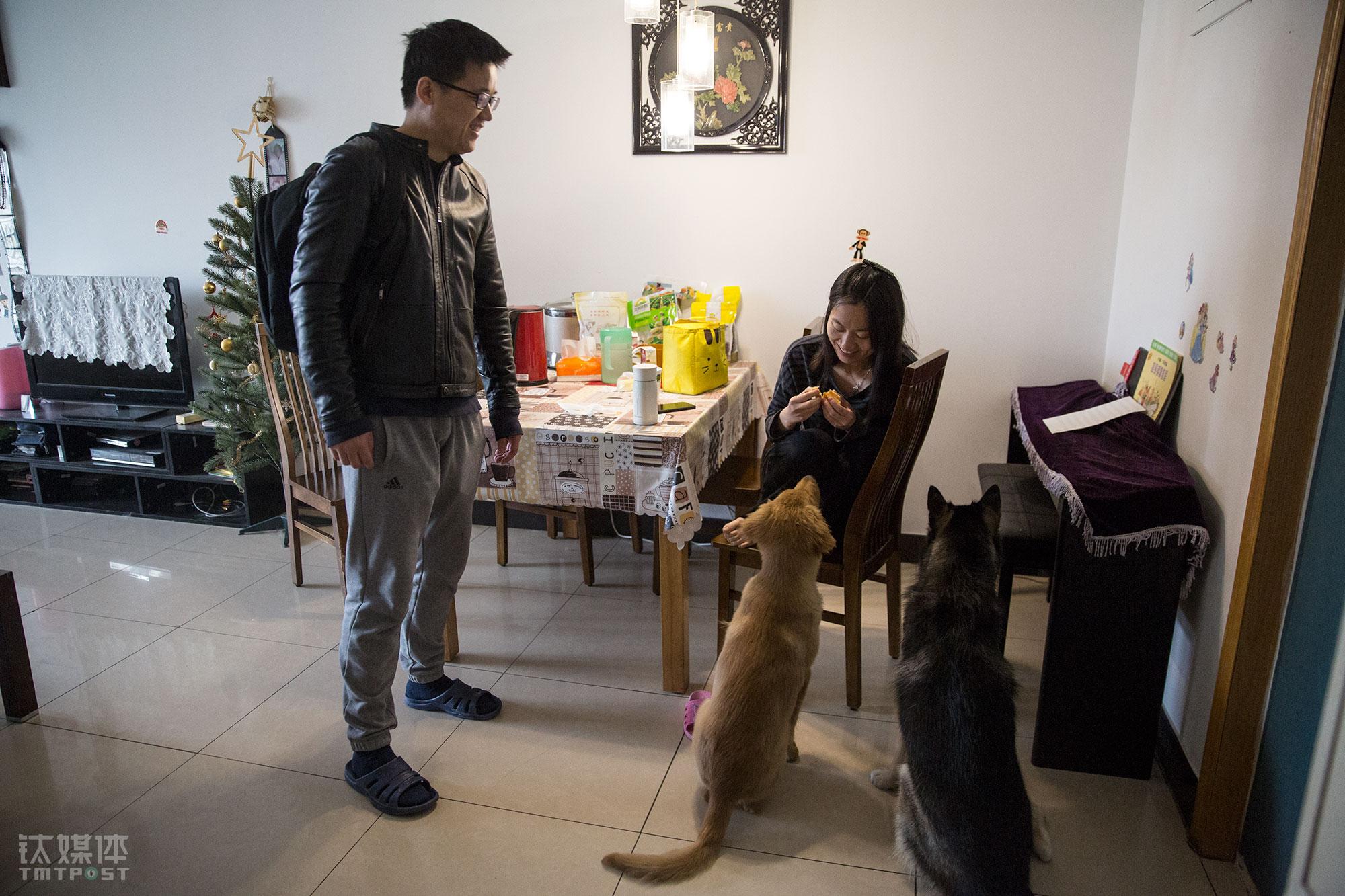 """4月3日早上,老徐遛完狗准备出门上班,他妻子正在吃早餐,Summer和多宝蹲坐地上等待着女主人喂食。""""以前觉得女儿一个人没有伴,现在Summer和多宝也可以陪伴孩子了。""""养狗之前,夫妻俩考虑过二胎的事情,养狗以后这一议题也暂时被放下了。"""
