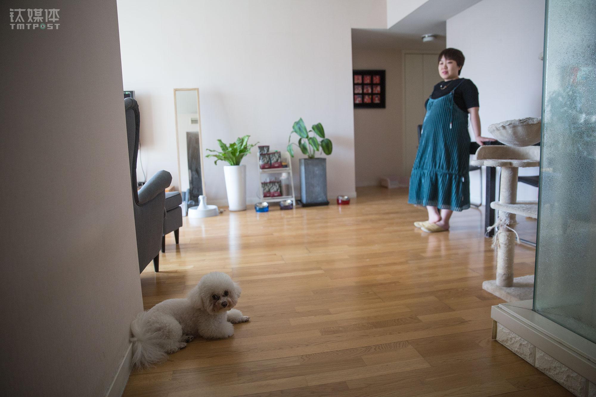 """4月11日,北京,准妈妈董杰妮在自己家,小狗Apple正趴在地板上休息。她的孩子9月份就要出生,对这个家庭来说,这个孩子将是家里的""""老四"""",她已经有一个""""女儿""""两个""""儿子"""",也就是小狗Apple和两只小猫。"""