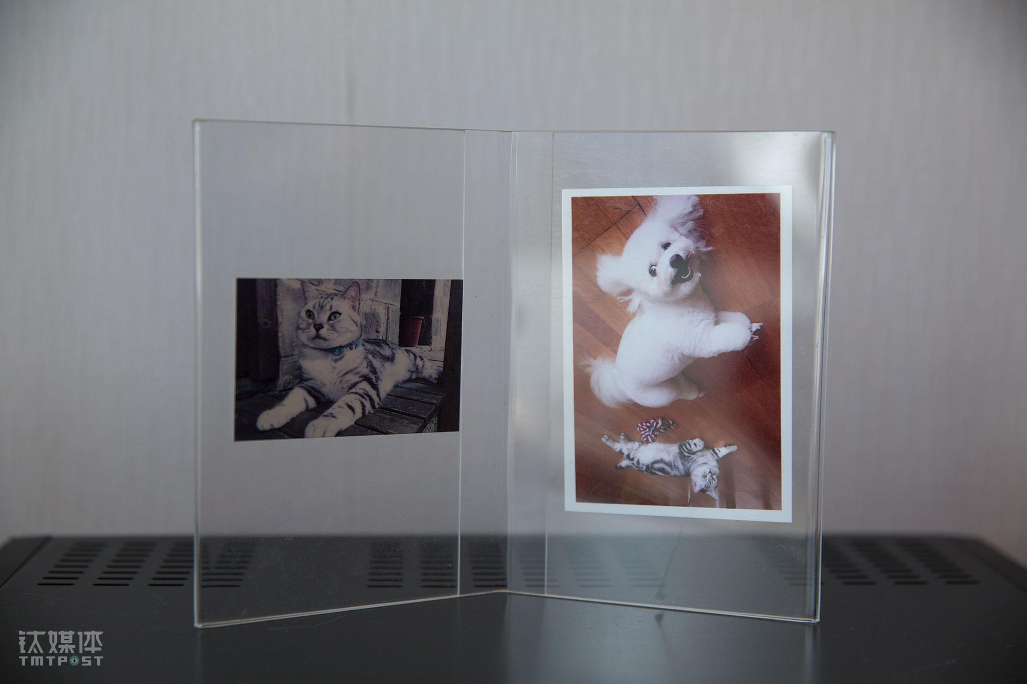"""在外旅行期间,董杰妮在客栈为小猫和小狗拍的照片。她每年都会和老公出去旅行一次,夫妻俩每次都选择自驾,因为只有这样才能带着家里的猫狗。猫和狗带给她不一样的感受。""""狗无时不刻需要人,一个人被需要的心里会得到极大满足;养猫的话,人更需要猫,当猫回应人的时候,人会觉得开心。""""董杰妮认为,养猫的人比养狗的人更加活在当下,他想要相对自由、随性的感情关系,而狗让人觉得自己超级被需要,她觉得狗养久了像小孩。"""