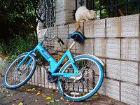 破产后的小鸣单车被回收,每辆12元