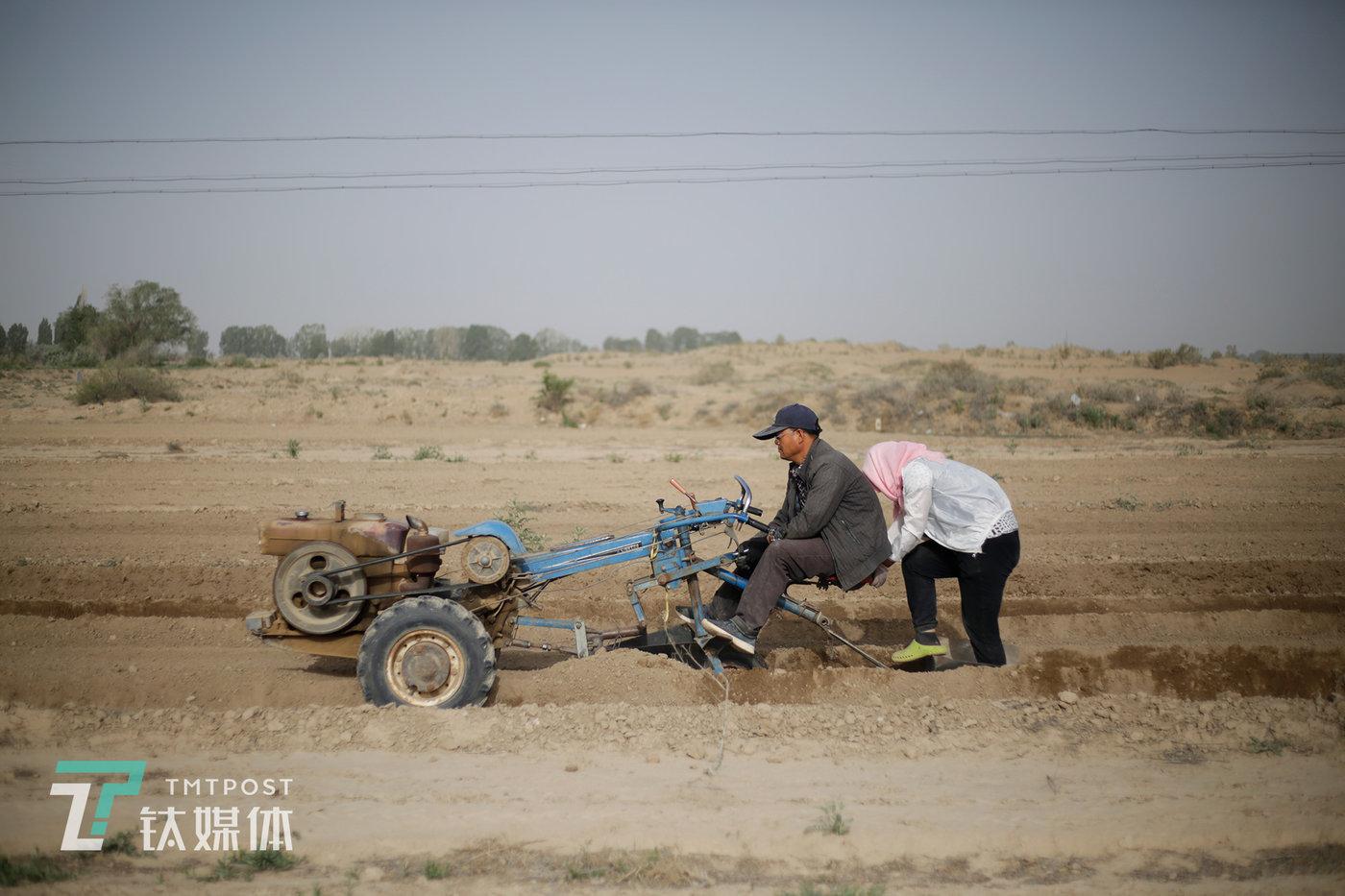 瓜农驾驶开沟机给瓜地开沟。种瓜的工序超过10道,这是所有工序中唯一用到的机械。