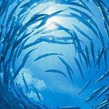 蓝海观察员