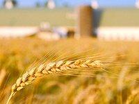 农产品电商:不止是看上去很美