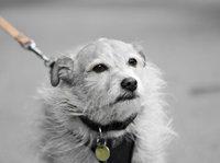 【书评】如那日到来,你可愿做一条狗?