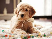 服务729家宠物店,打破垂直SaaS天花板,落后的宠物服务让这家公司找到了新出路