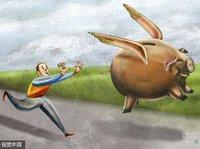 """一场""""互联网+猪+金融""""的畜牧理财实验"""