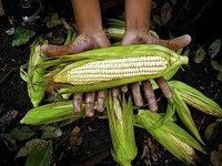 种地也要输给人工智能,浅谈AI在农业领域的应用