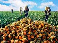 未来十年,中国农业的投资机遇在哪里?