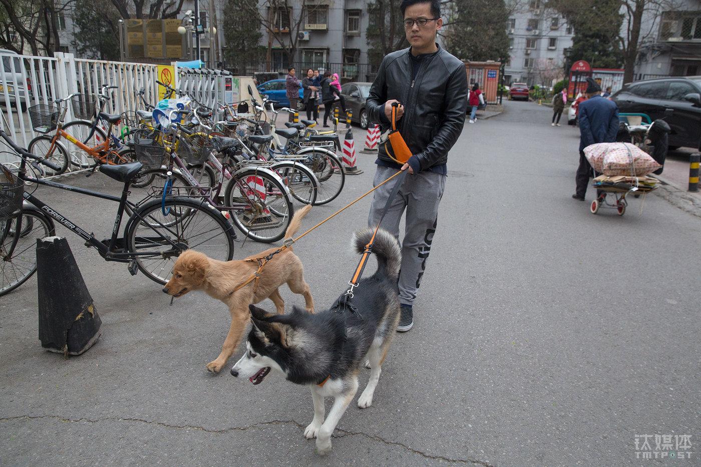 只要天气允许,老徐每天早上或者晚上都牵着两只狗下楼活动。小区附近有一块专门给狗狗玩乐的空地,4月份开始一直在施工。不知道会不会拆掉,老徐说,如果拆掉了,它们没法像之前一样在那块地方脱掉绳子自由活动。