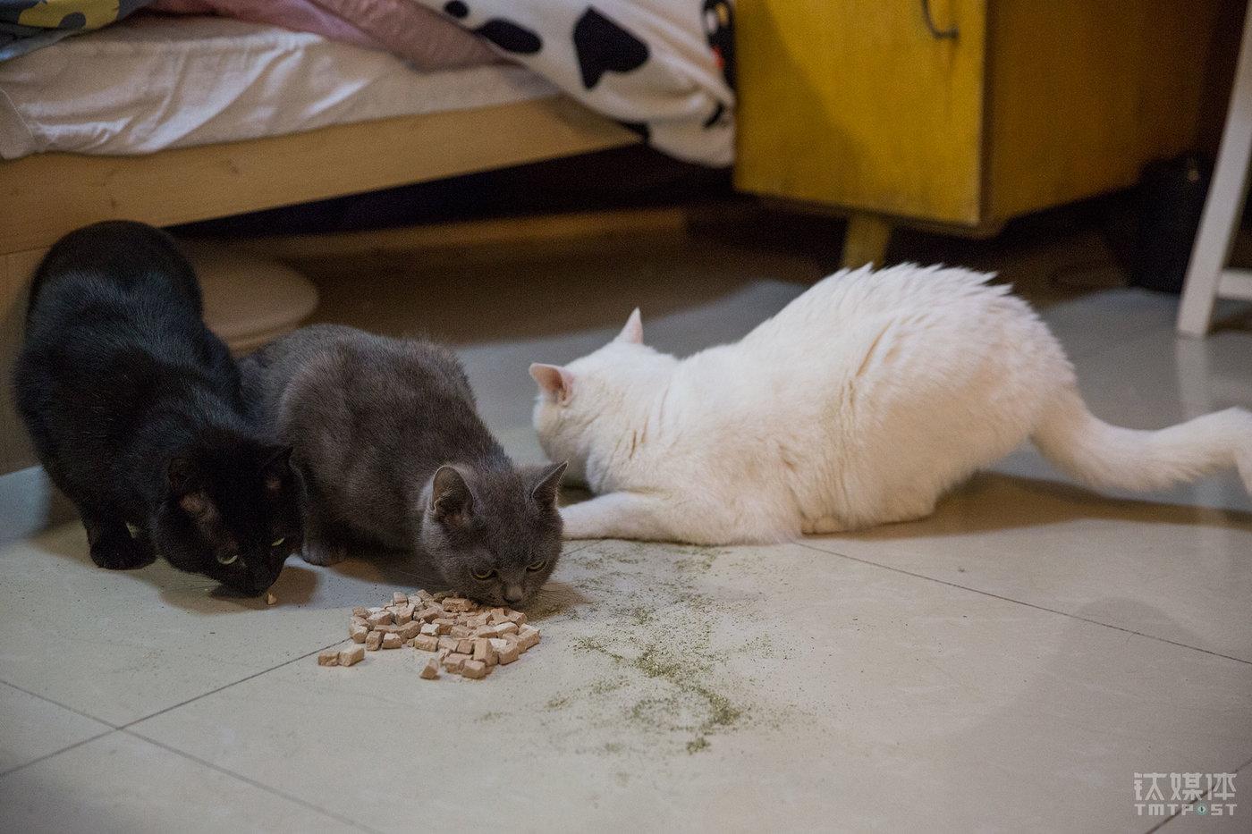 三只猫分别叫包包(右)、小二黑(左)、公主(中)。5年前,Julia开始养猫,第一只是白猫包包。经常出差的工作节奏,让她没有太多时间陪伴猫,为了让包包有个伴,一年后Julia又领养了小黑。当包包和小黑慢慢长大,她又抱养了公主。(摄影师到来时,小黑和公主很快躲到床底下不再出现,为了让摄影师顺利拍摄到3只猫在一起的状态,Julia在地上撒了猫薄荷、零食等,成功吸引了3只猫同框。)
