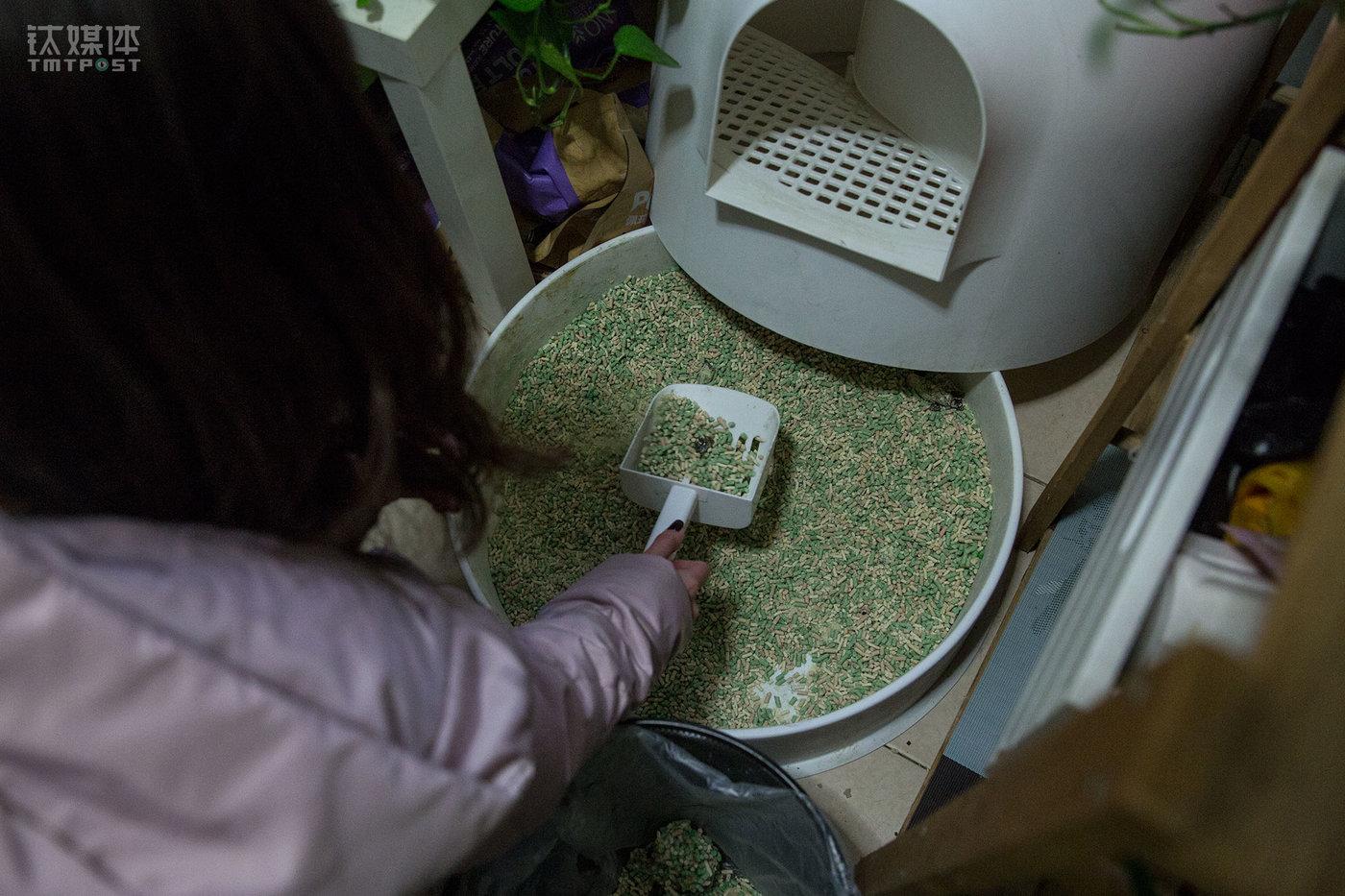 """每隔一两天,她就要充当一下""""铲屎官""""。养三只猫的花费每月1000元不到,包括猫粮、猫砂、周边用品、玩具等支出。"""