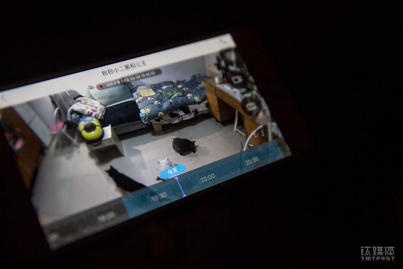 北京望京,钛媒体电商平台钛空负责人Julia透过360摄像头观察家里的3只猫。