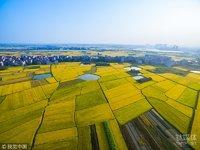 AI公司进入农业找场景,「麦飞科技」的第一步是帮农民节省农药钱