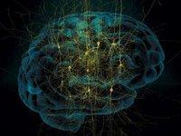 想要研究大脑,你必须先了解下虚拟大脑