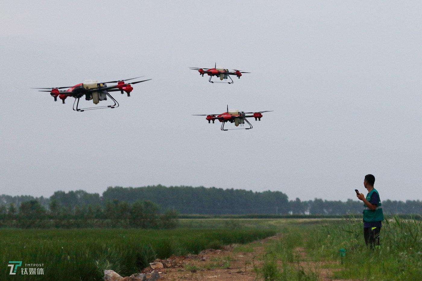 任维新向钛媒体《在线》展示同时操控三台植保无人机。最多的时候,他每天要完成100垧(15亩=1垧)地的喷洒作业,为此他雇佣了两名帮手,但还是忙不过来,农户通常需要提前两天预约。