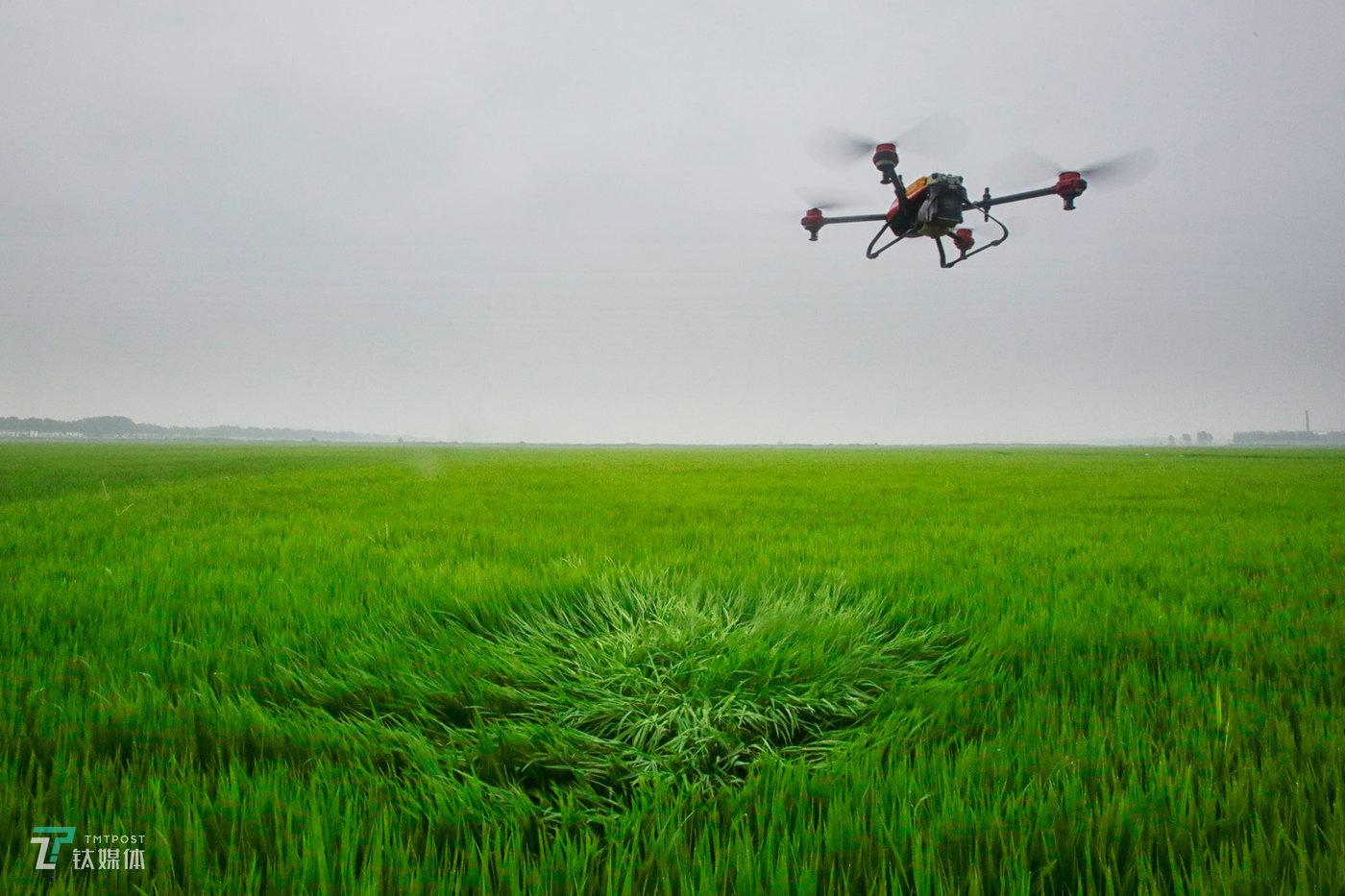 """去年两口子花15万买了这架极飞和周边设备,植保飞防市场在北大荒的兴起,让他们俩""""去年作业两个月就回本了""""。林东旭向钛媒体《在线》介绍,这架飞机一次起降作业,他们就能挣80元,无人机1小时的作业面积,以往人工喷洒需要2天。"""