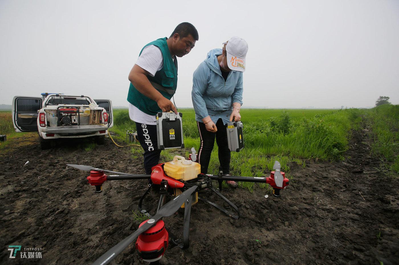 一次飞行完成,夫妻俩给飞机换电池和药瓶。夫妻两人同岁,都是1989年生,都在农场长大,也都喜欢农机具,家里在农场开了一个农药生资小店。